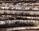 Береза на дрова для бани